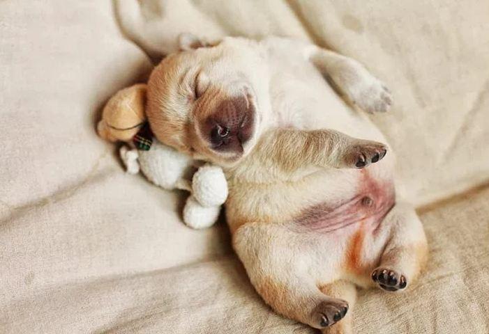 Um belo gordinho dormindo