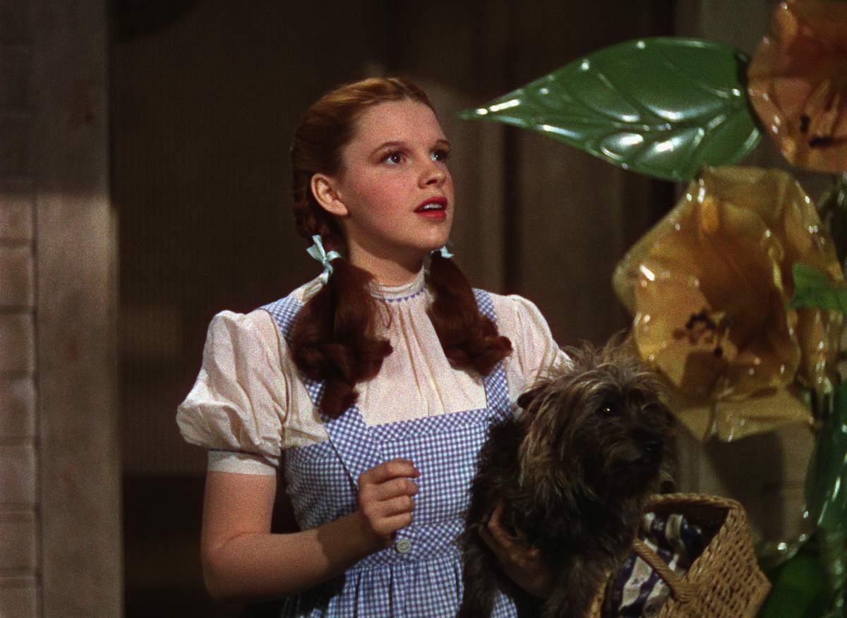 Ao cachorro de Dorothy, Toto, no O Mágico de Oz pagavam de maneira incrível