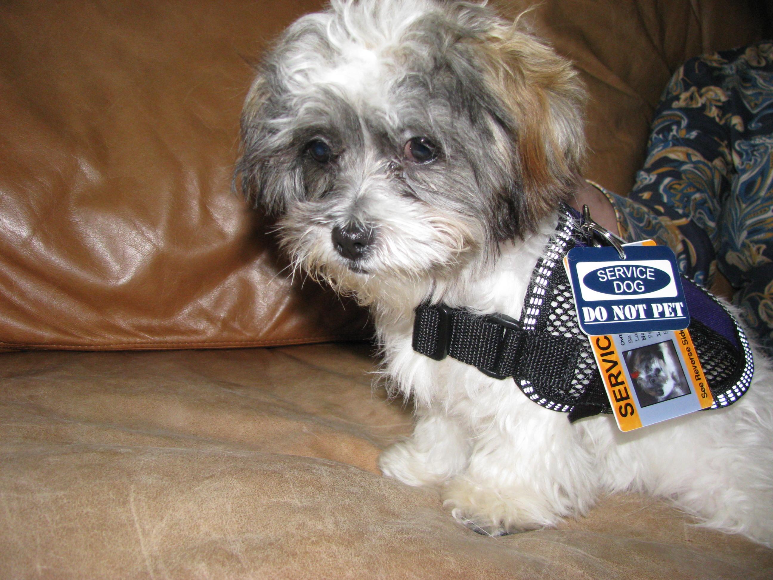 Como um cão se torna um policial?