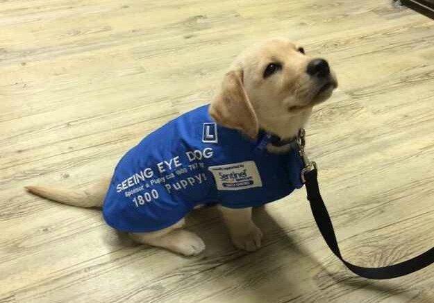 Se você não tem um cão policial, ele passa a ser um cão-guia