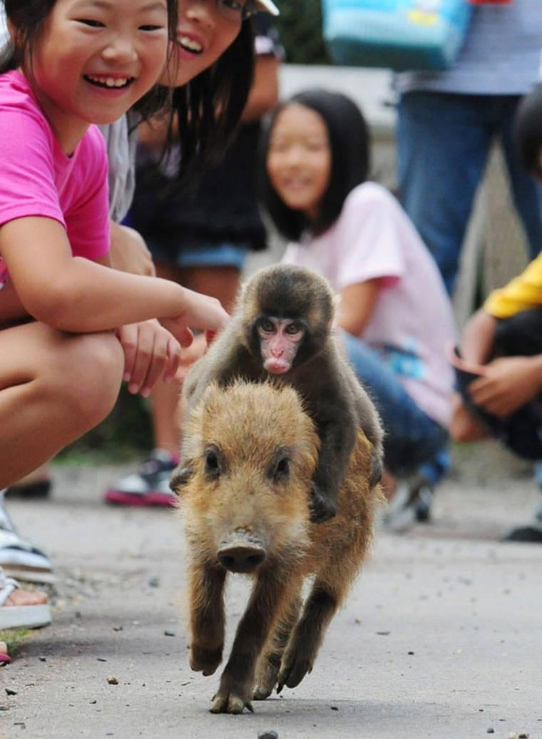 Macaco e porquinho inseparáveis