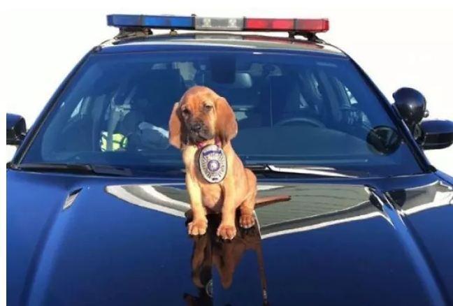 á também cães que prestam serviço de forma diferente