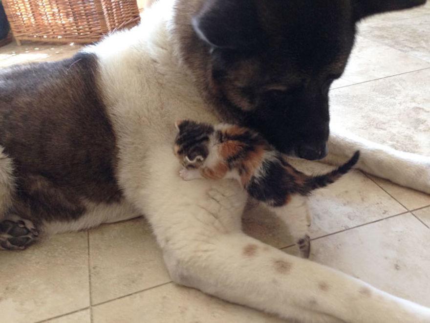O papai cachorro e sua pequena gatinha