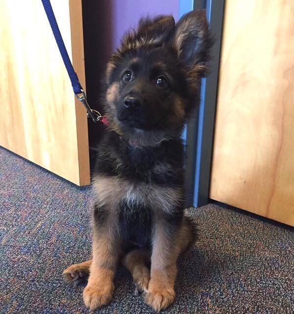 Obter documentos de cães policiais é muito caro