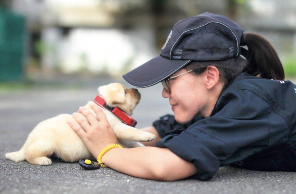 Existem universidades de cães policiais