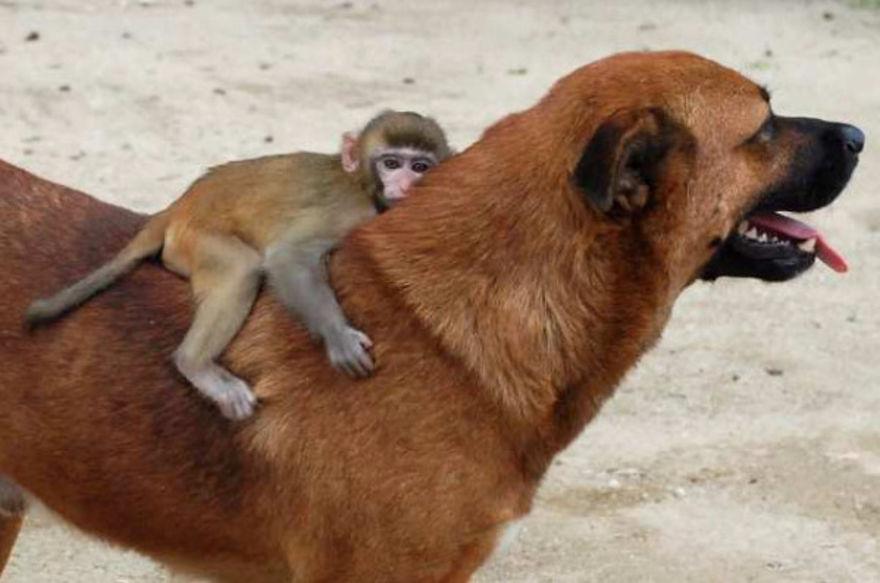 Cachorro e macaco inseparáveis