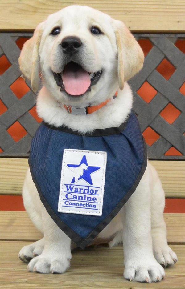São cães felizes e orgulhosos por ajudar
