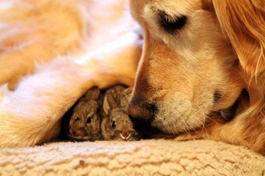 Dona cadela e seus pequenos coelhos