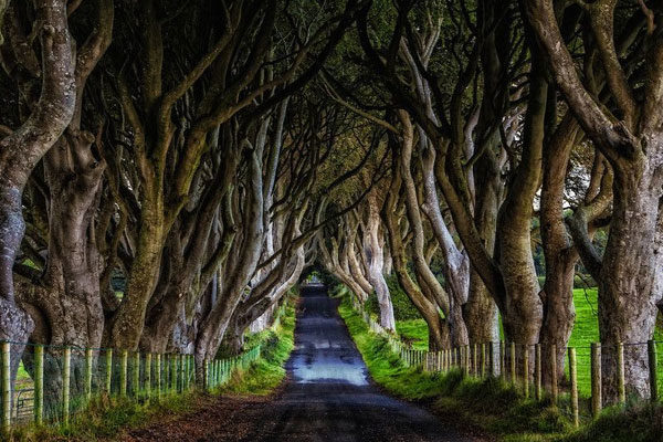 O caminho de Dark Hedges na Irlanda