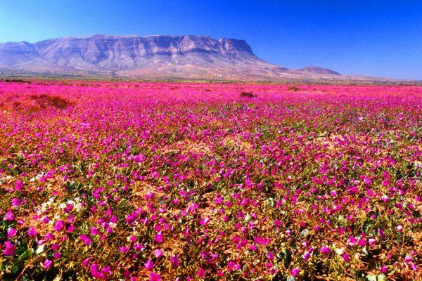 O deserto de flores