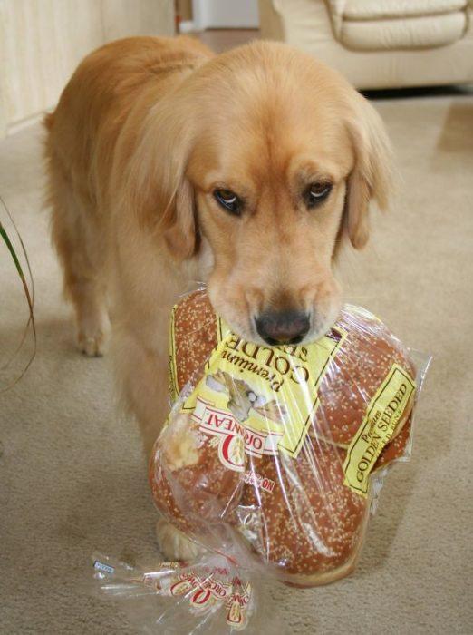Alguém roubou os hambúrgueres do supermercado