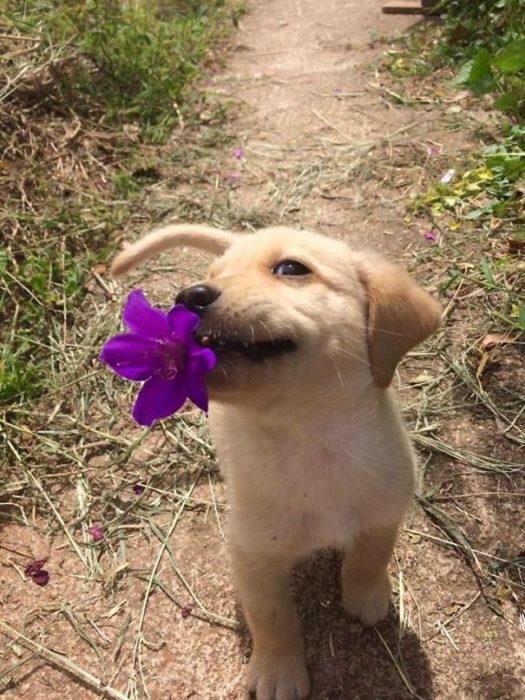 Esta coisinha só traz uma flor. Mas é uma fofura!