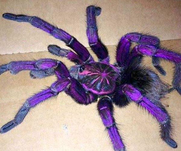 Estatística curiosa: é mais fácil morrer com uma cortiça do que uma aranha