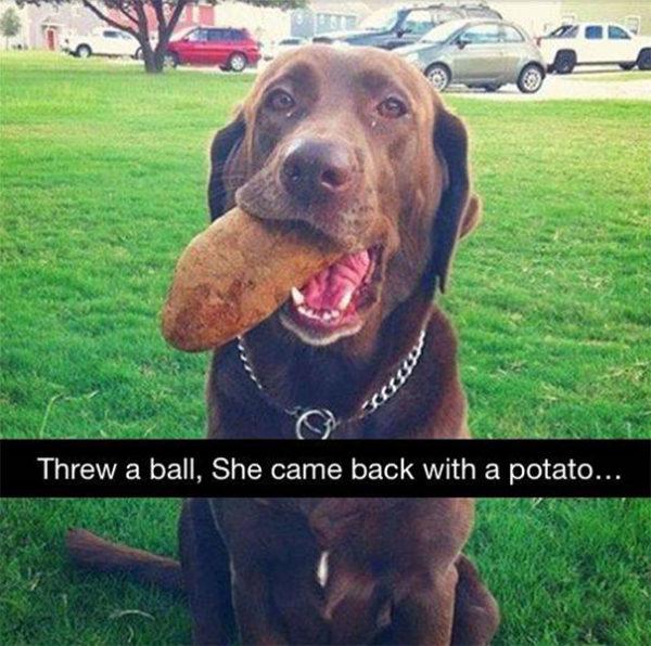 Ele foi pela bola e voltou com uma grande batata