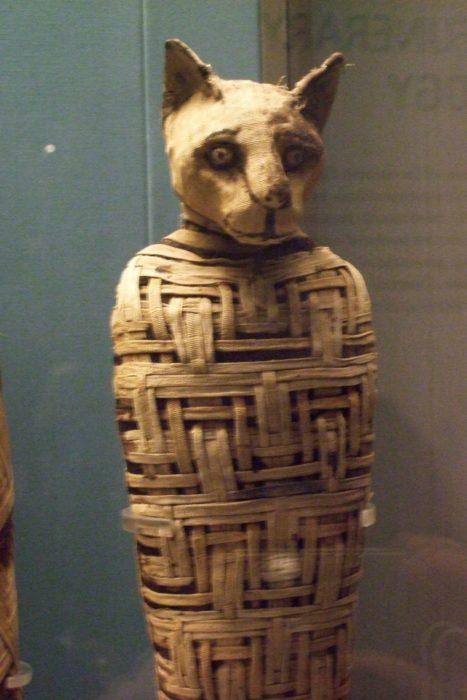 Os gatos eram considerados animais sagrados, por isso eles eram mumificados