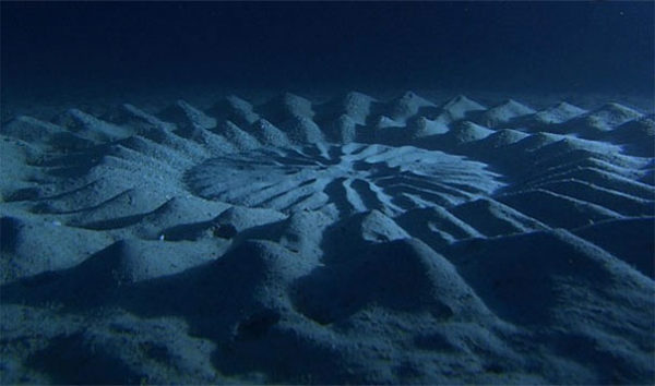 Círculos sob o mar