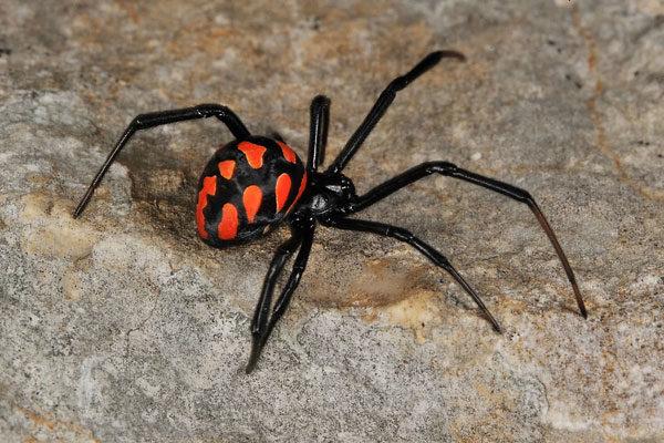 Tem medo de ser mordido por uma aranha?