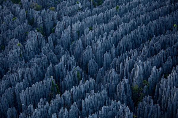 Uma floresta de pedra em Madagascar