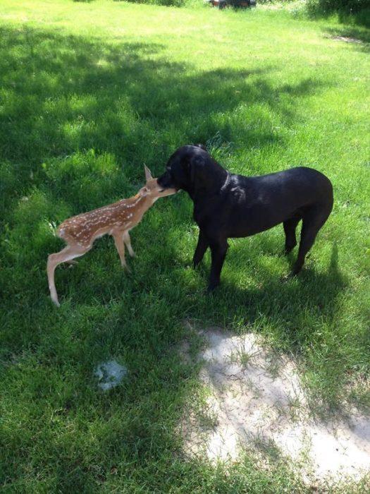 Quando meu cão chegou em casa com isso, eu tive que chamar a Sociedade Protetora dos Animais