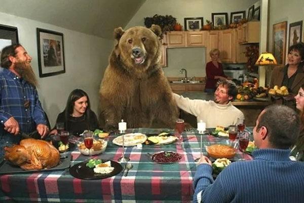 O urso dos comerciais