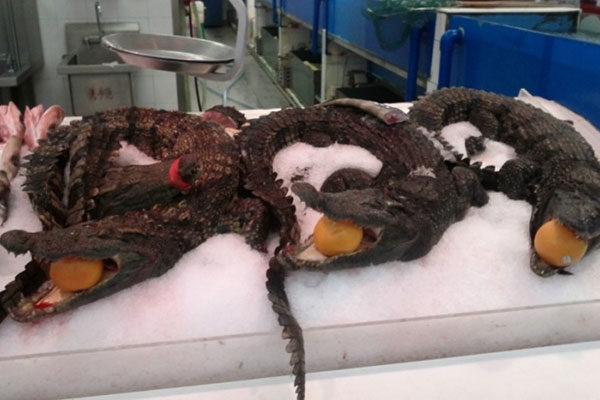 Tubarões e crocodilos inteiros nos supermercados