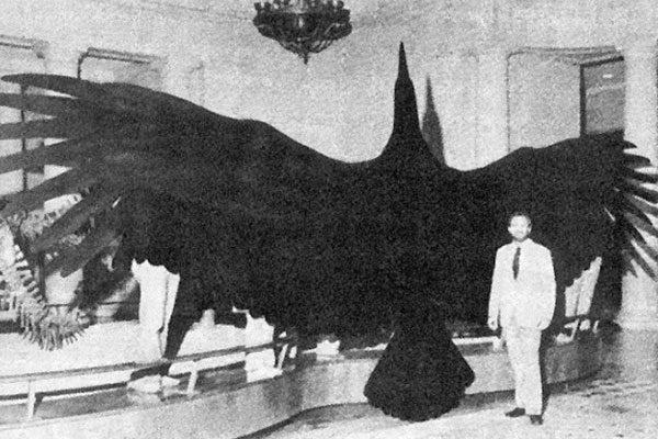 O maior pássaro do mundo