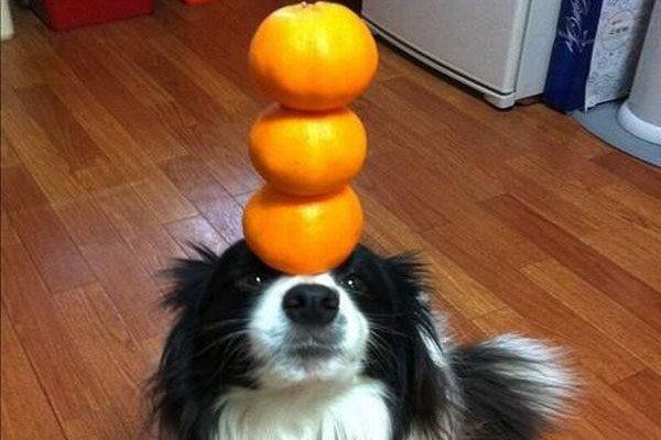 Muito equilíbrio