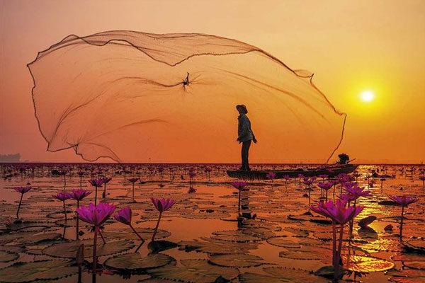 Tailândia, o lago da flor de lótus