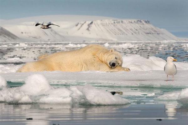 Sonhando com o gelo no mar