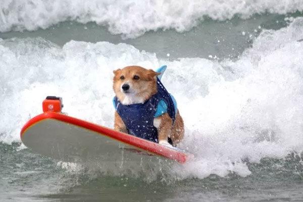 O rei das ondas!