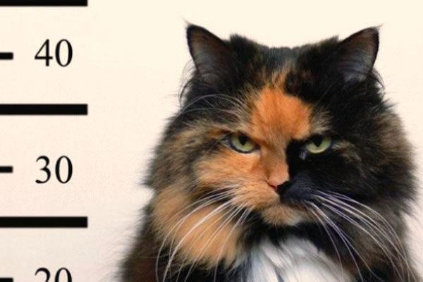 Um gato cúmplice