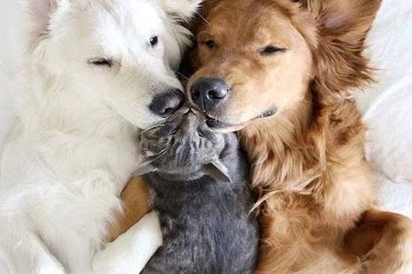 Uma família adotiva