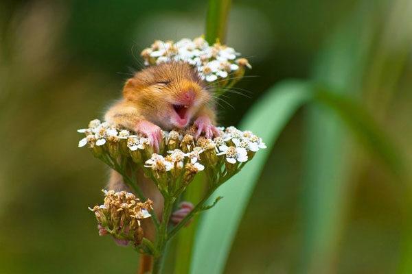 Alguém ama as flores