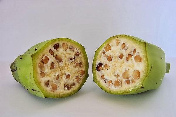 Banana selvagem