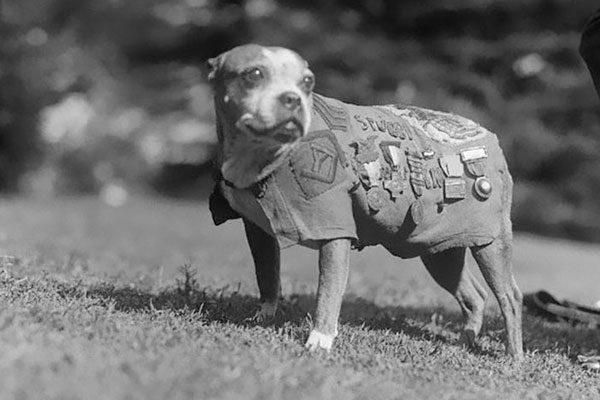 Stubby, o sargento