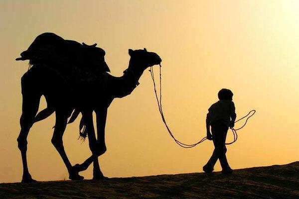 Um camelo atrás das grades