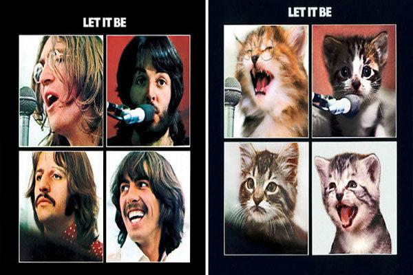 abe6307bb2192 As capas dos álbuns mais famosos são recriadas com estes gatinhos ...
