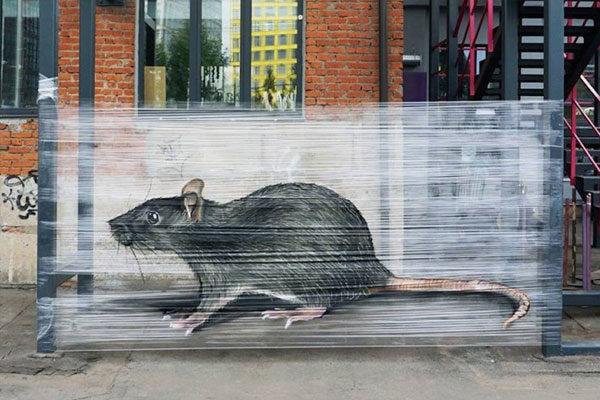 Um grande rato da cidade