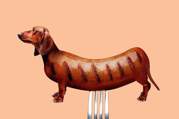 Um verdadeiro cão salsicha