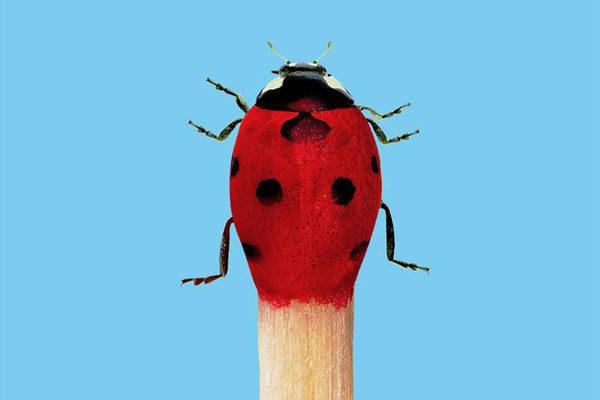 De Lady-inseto a Fogo-inseto
