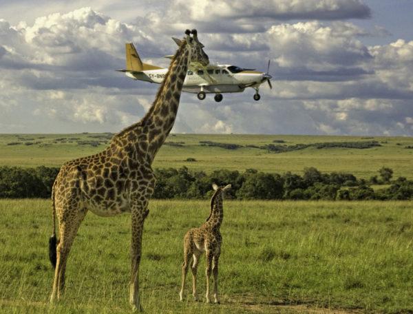 Tão alto quanto uma girafa