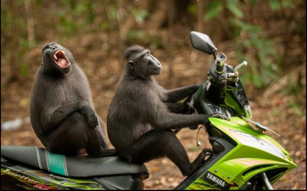 Dois loucos ao volante...