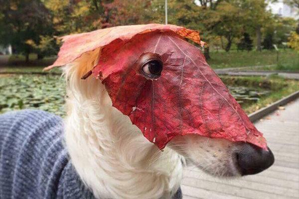 Não são simples folhas!