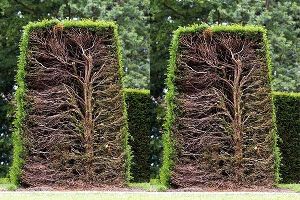 Árvore pela metade