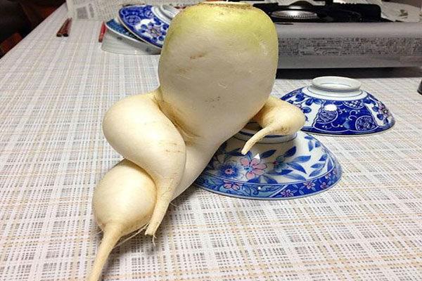 Um vegetal muito sexy
