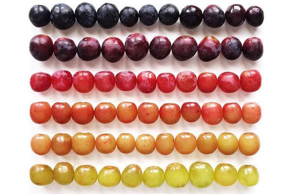 As sombras perfeitas das uvas