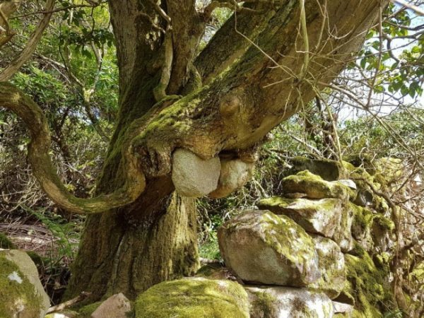 Natureza integrada