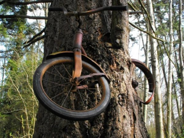 A bicicleta abandonada tornou-se parte de algo maior!