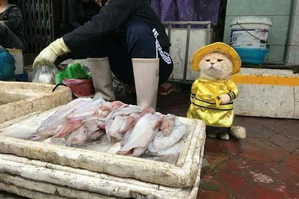 O gato vendedor