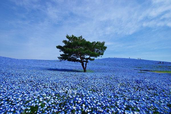 Parque Hitachi Seaside, Hitachinaka, Japão